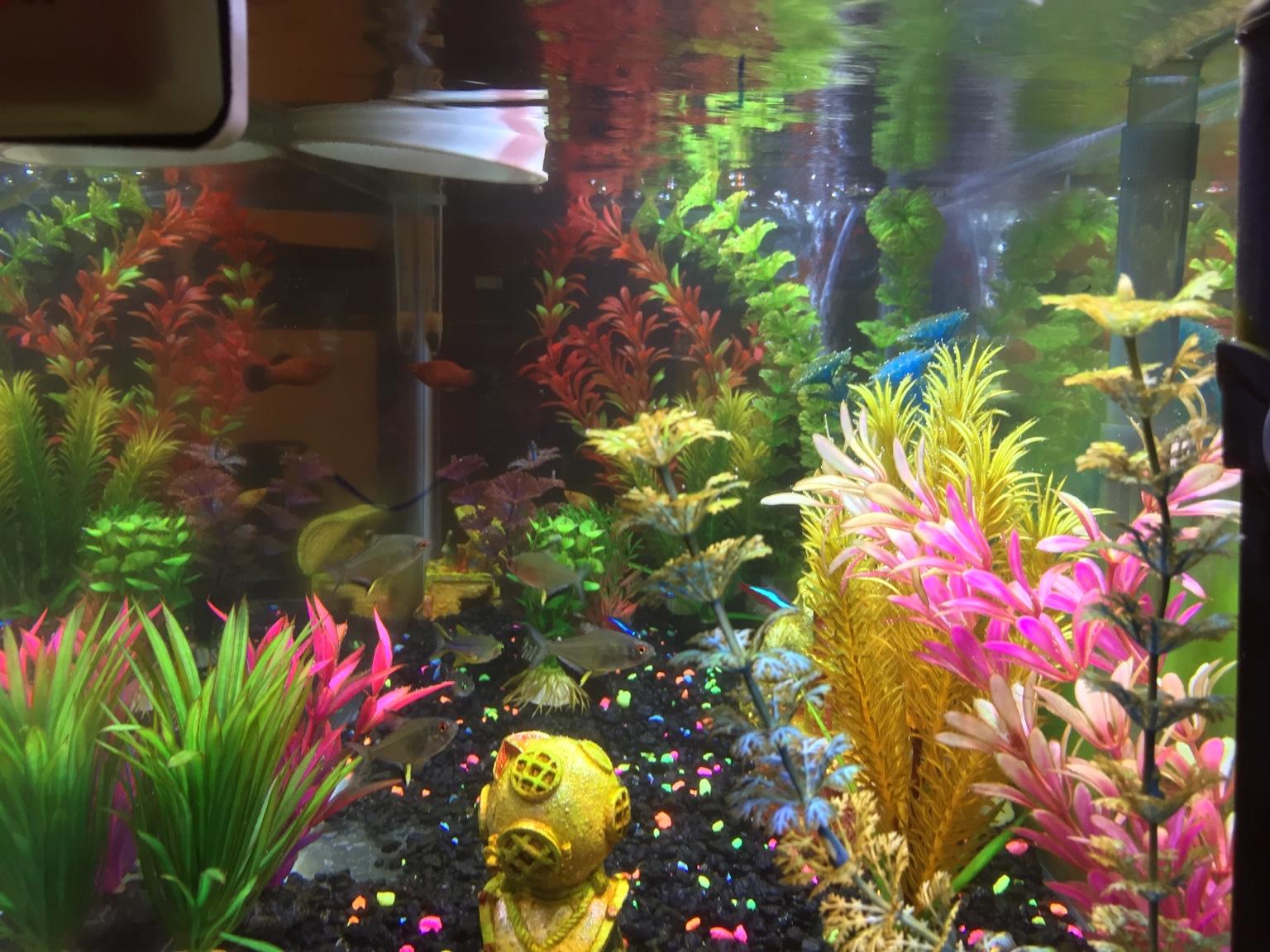 Freshwater aquarium fish water change -  Img Img