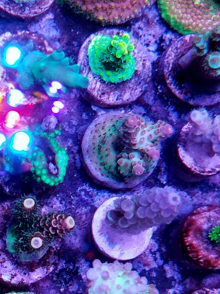 What are your results with radion sps ab+ template?? - Reef