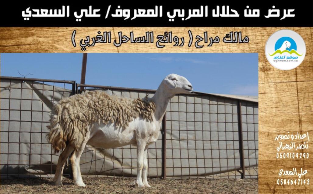 دعوه لحضور مزاد روائع الساحل 21652b3189318fc7b0aa