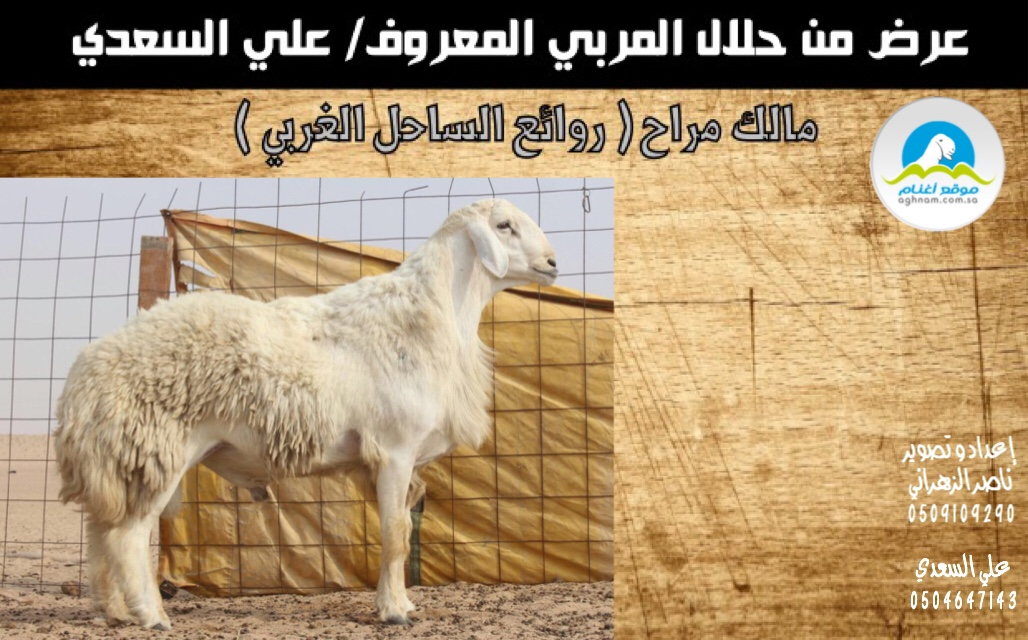 دعوه لحضور مزاد روائع الساحل 3ade8277998bda12b194