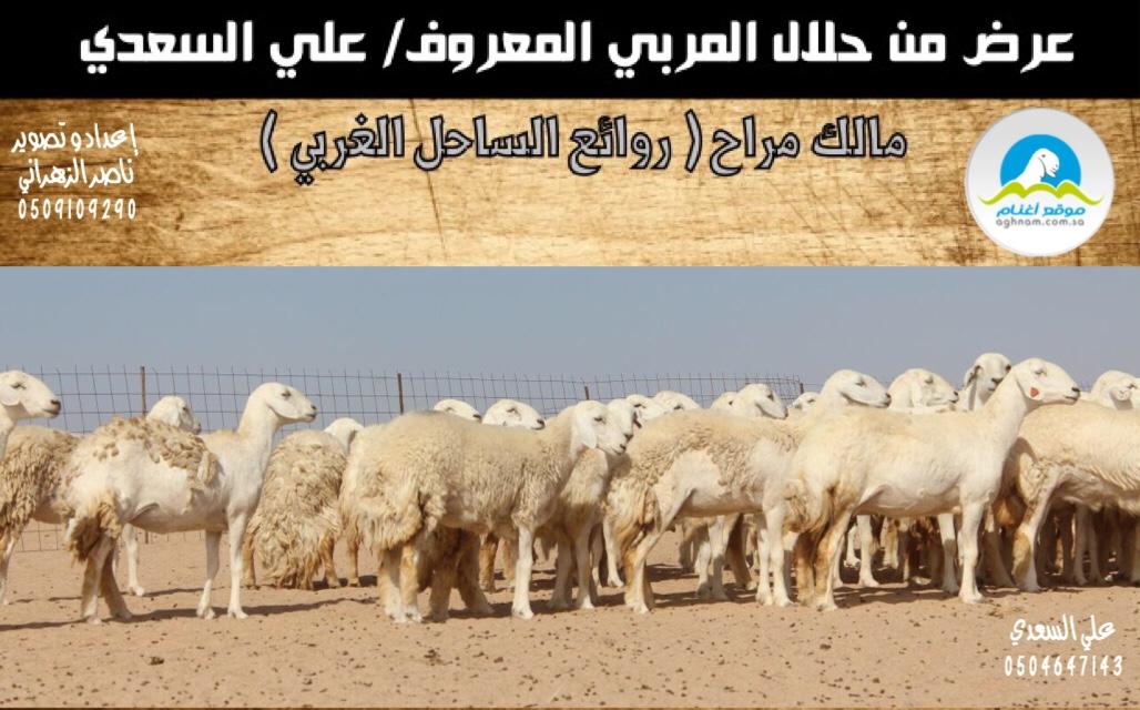 دعوه لحضور مزاد روائع الساحل aab3c9195a424750207a