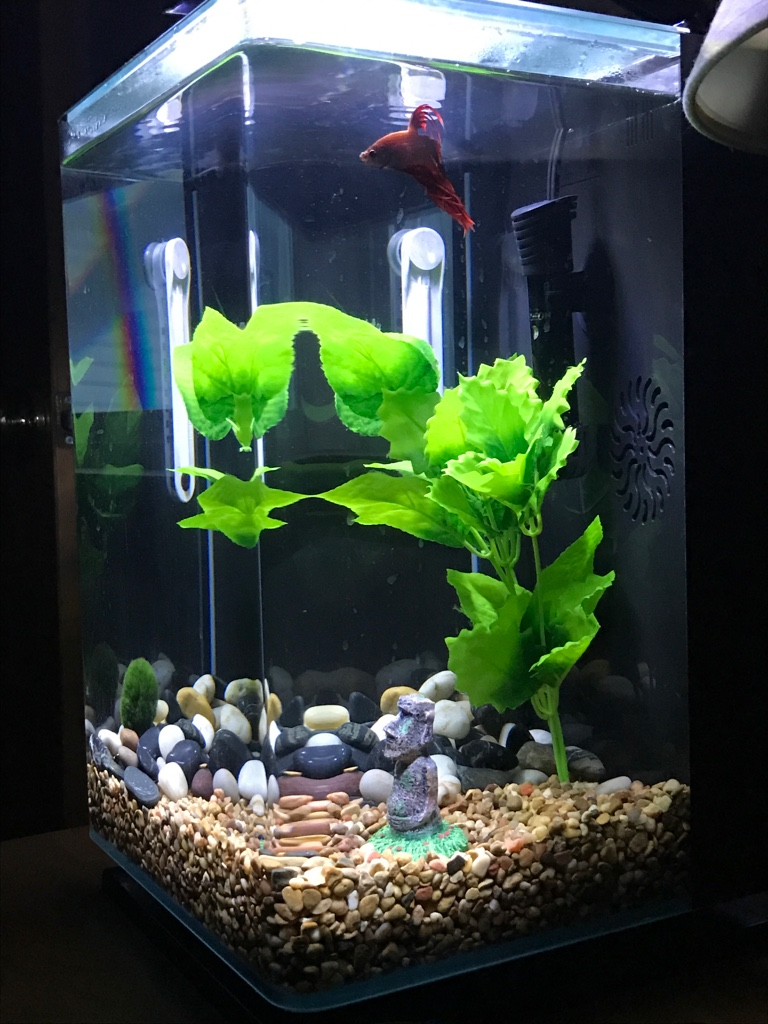 Freshwater fish no filter - Could Any Other Fish Go In This Aquarium Just Curious I Currently Have Just One Male Betta And I M Asking My Question As If The Tank Had No Fish In It