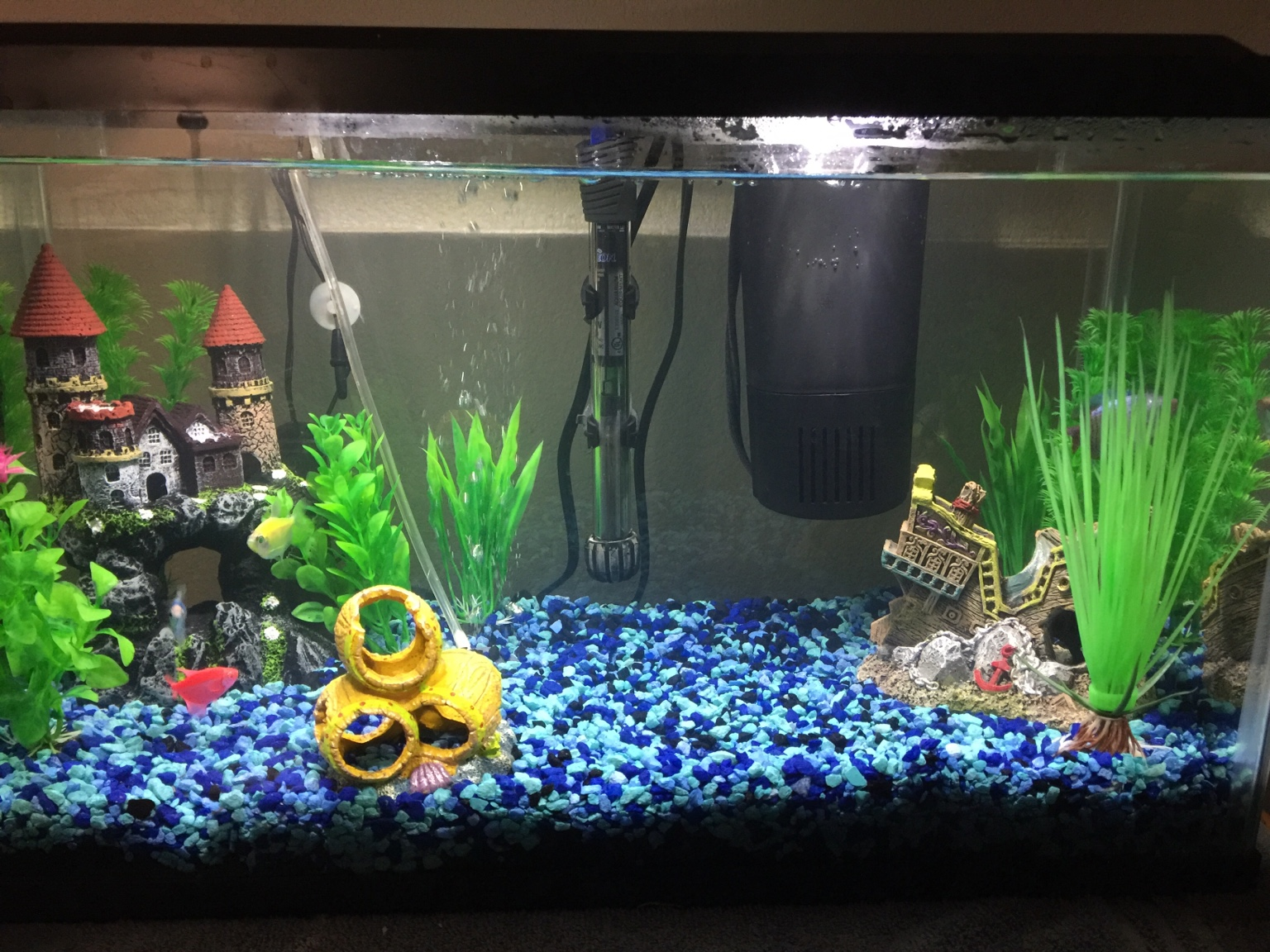 Freshwater aquarium fish aggressive - Thank You For Your Help
