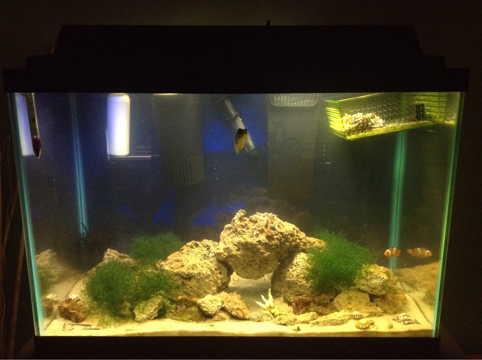 Saltwater aquarium - My Tank Has Been Running For 2 Months Ammonia 0 0 5ppm Nitrites 0 My Nitrates Have Been At 0 Since I Ve Introduces Chaeto Into My Tank Ph 8 0