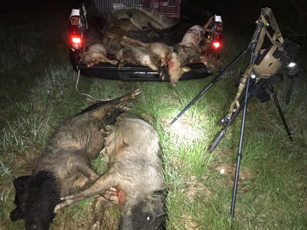 eradication of feral hogs in new In missouri, the state has determined that, when it comes to feral hogs, sport hunting and eradication efforts are not compatible as a result, the state is shutting down sport hunting for feral hogs on any lands owned or managed by the missouri dept of conservation.