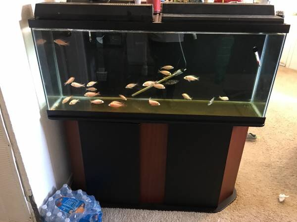 for sale 55 gallon fish tank for sale