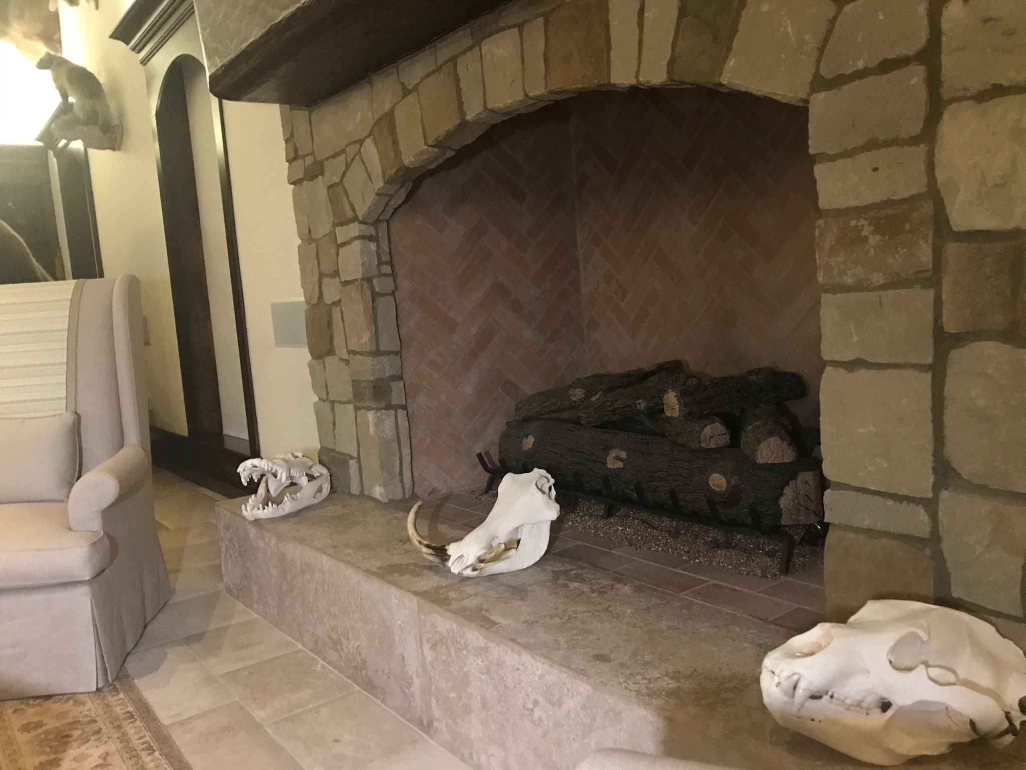 bear skull displays
