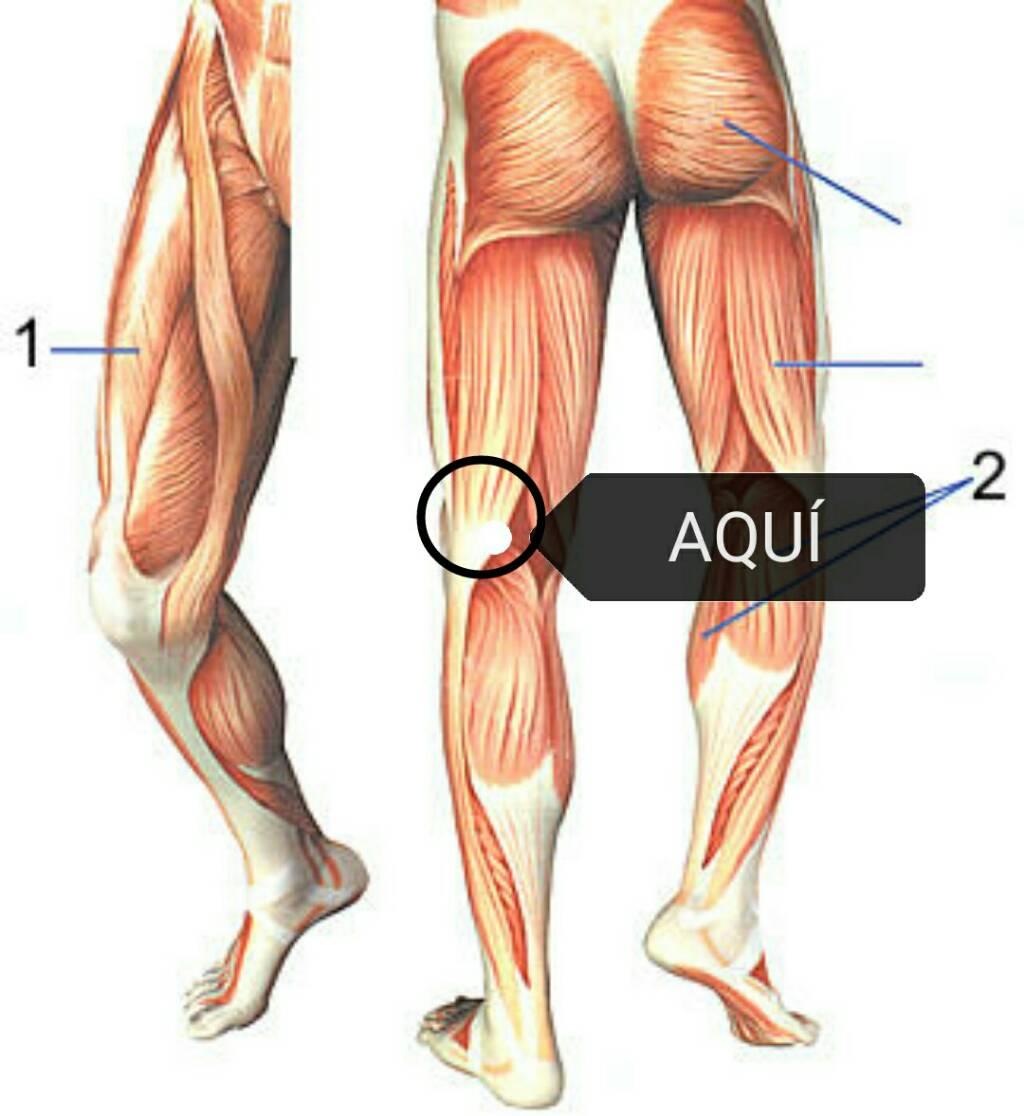 Dolor en parte trasera piernas - Dolor en la parte interior de la rodilla ...