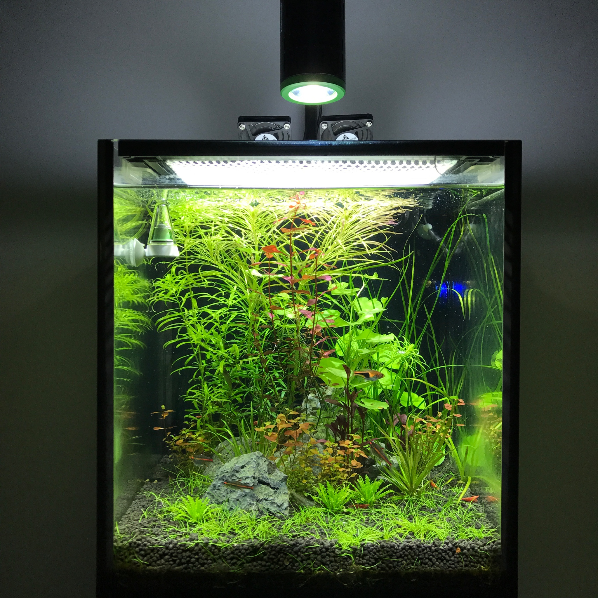 10 gallon nano planted tank page 2 the planted tank forum. Black Bedroom Furniture Sets. Home Design Ideas