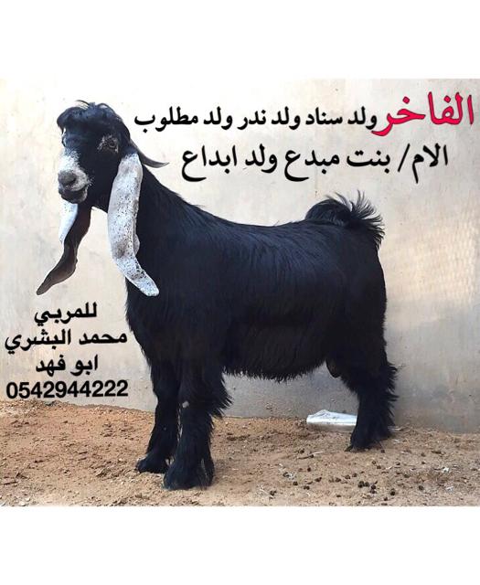 اللي يبيله عارضي ومعرف يتواصل 18a63f6d51c1992f8ac1