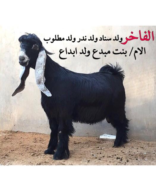 (((لاهل الصنف عارضي وسلالته عاليه))) 58e9278ea6dfda73d014