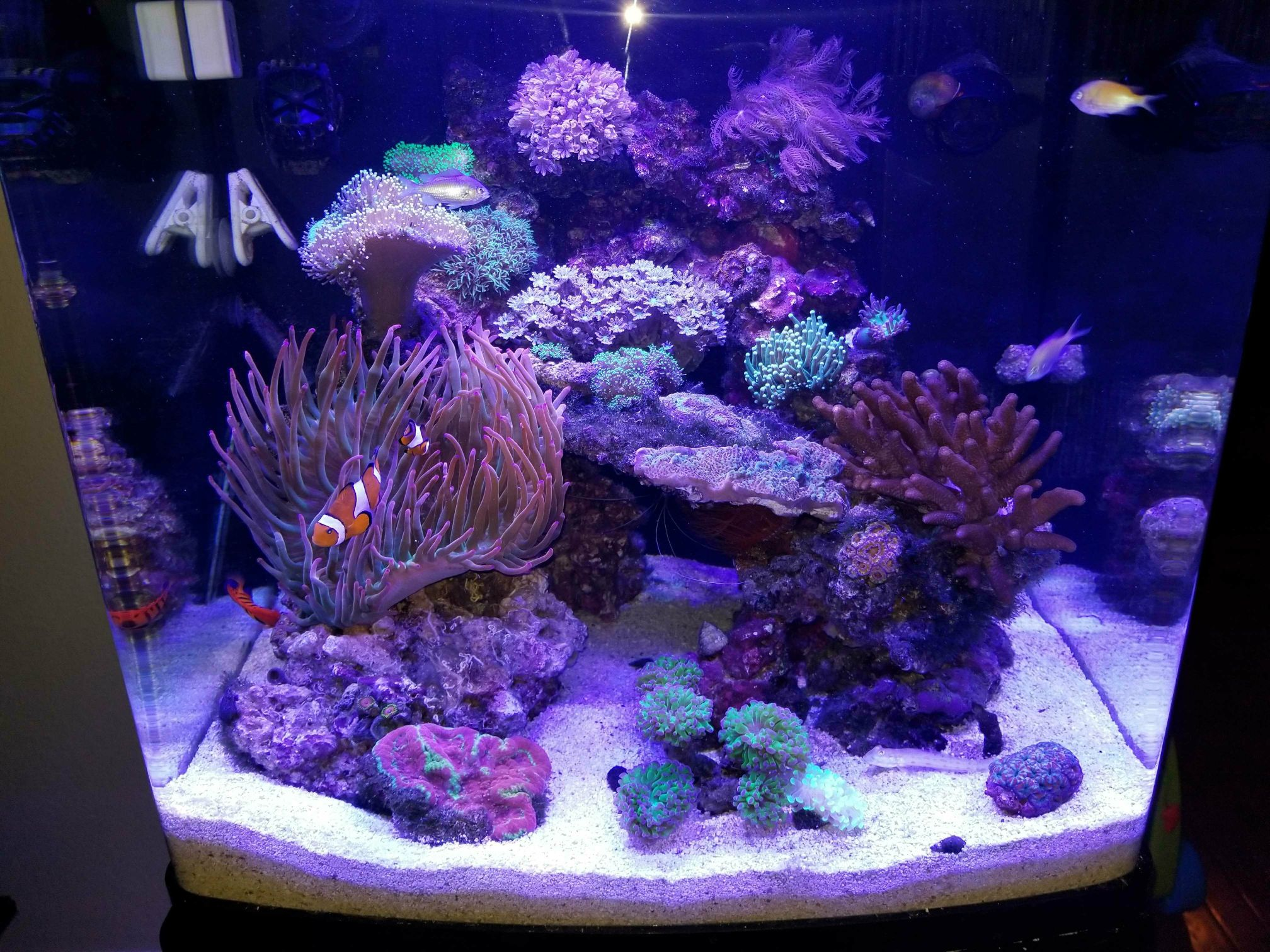 New biocube 32 Cloudy water Reef Central line munity