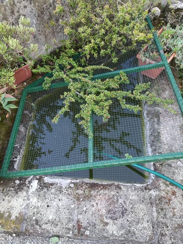 Consigli acqua in piccola vasca esterna con pesci rossi for Vasca pesci rossi giardino