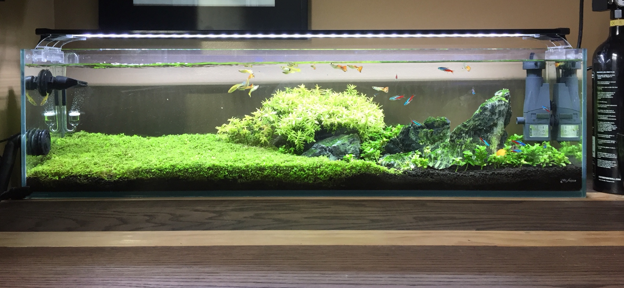 It Has Gone Through Many Changes And This Was Right Around The Time I Broke Down A High Tech Planted Tank Is Actually Lot More Maintanance Than