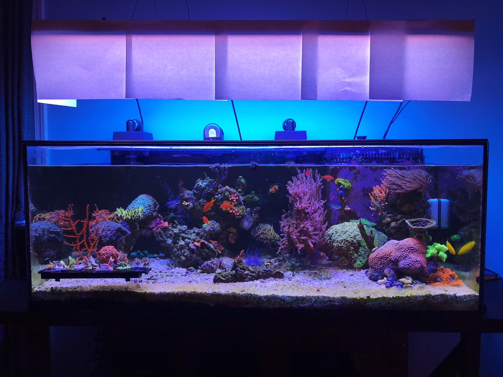 full tank shot friday page 17 reef central online community