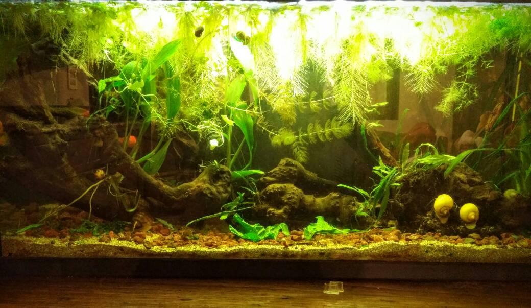 pmdd: come stanno le mie piante? - pagina 3 - forum acquariofilia ... - Piante Galleggianti Acquario Chiuso
