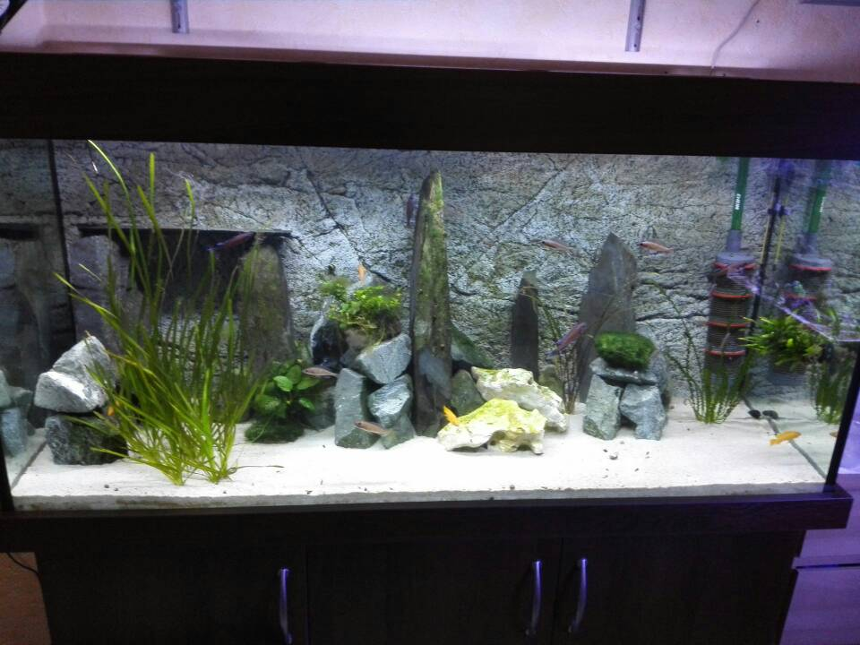 ich kann mich nicht entscheiden schwarzer oder wei er sand aquarium forum. Black Bedroom Furniture Sets. Home Design Ideas
