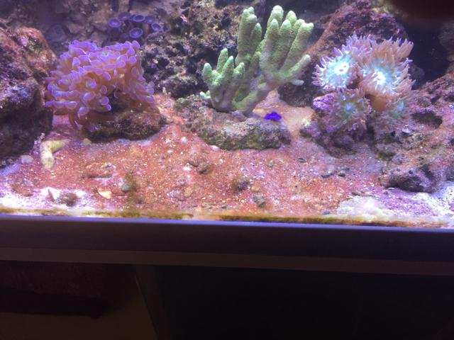 Rot brauner belag auf dem boden und bl schen an den for Boden aquarium