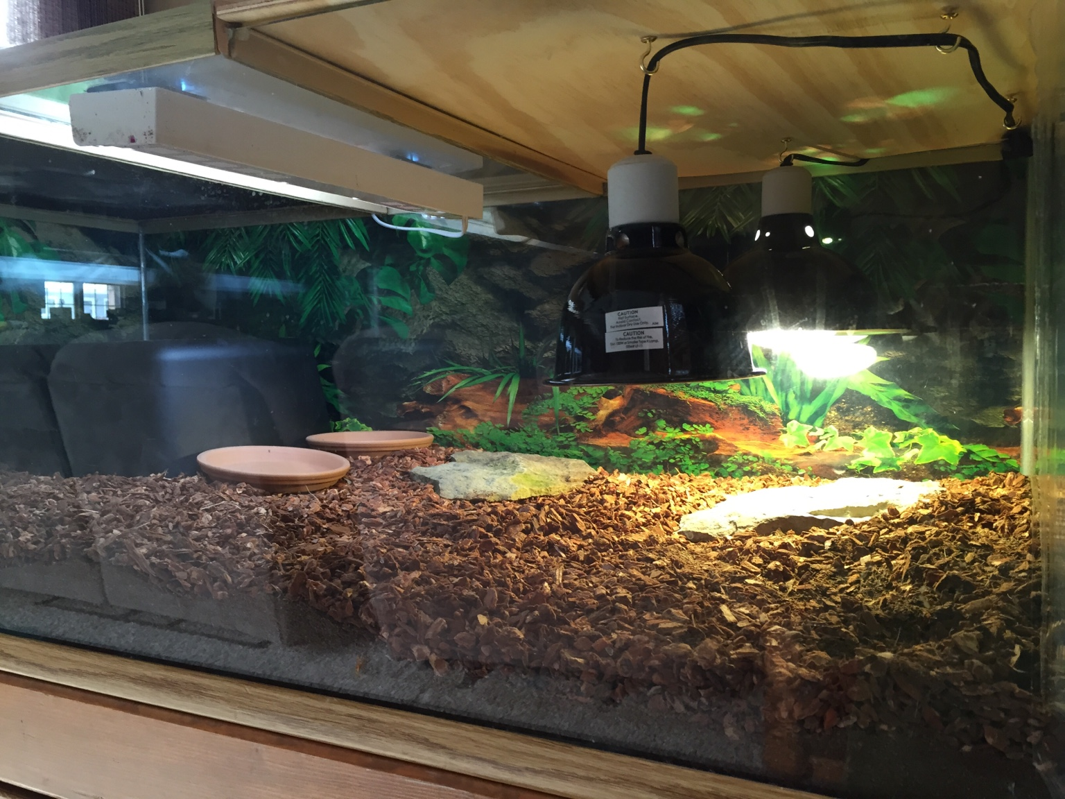 Please Critique New Baby Sulcata Habitat Tortoise Forum
