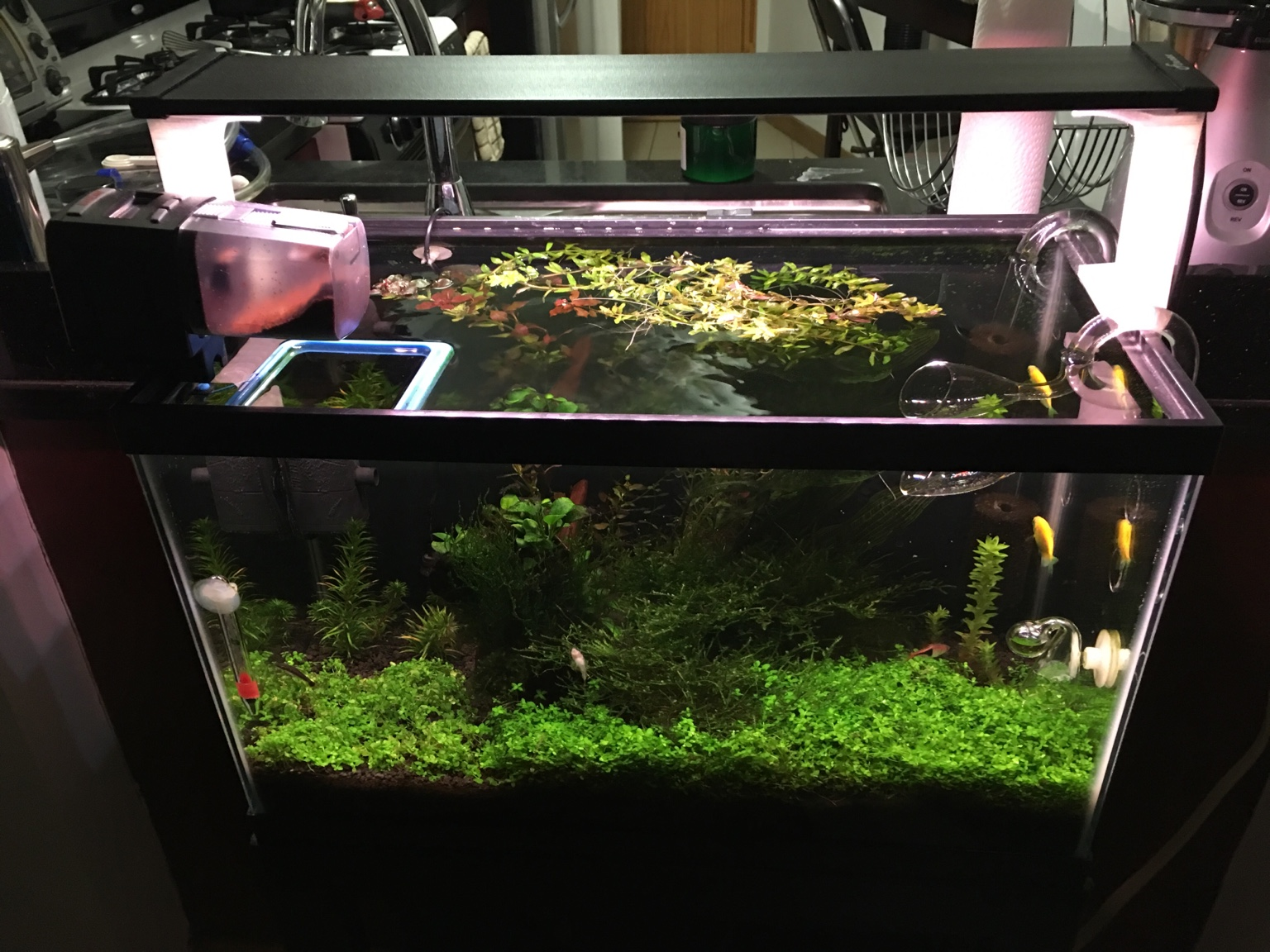 finnex planted 24 7 or ray 2 for taller tank the planted tank forum