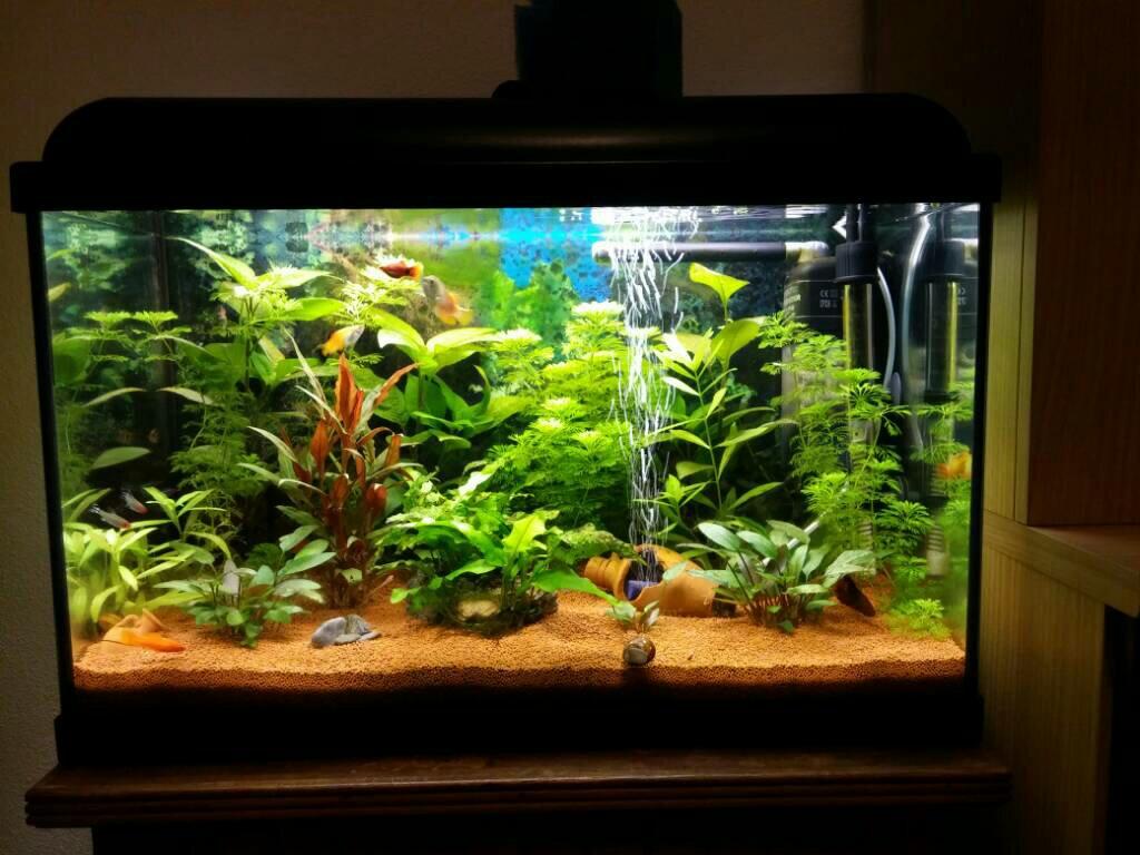Sifonar fondo acuario plantado
