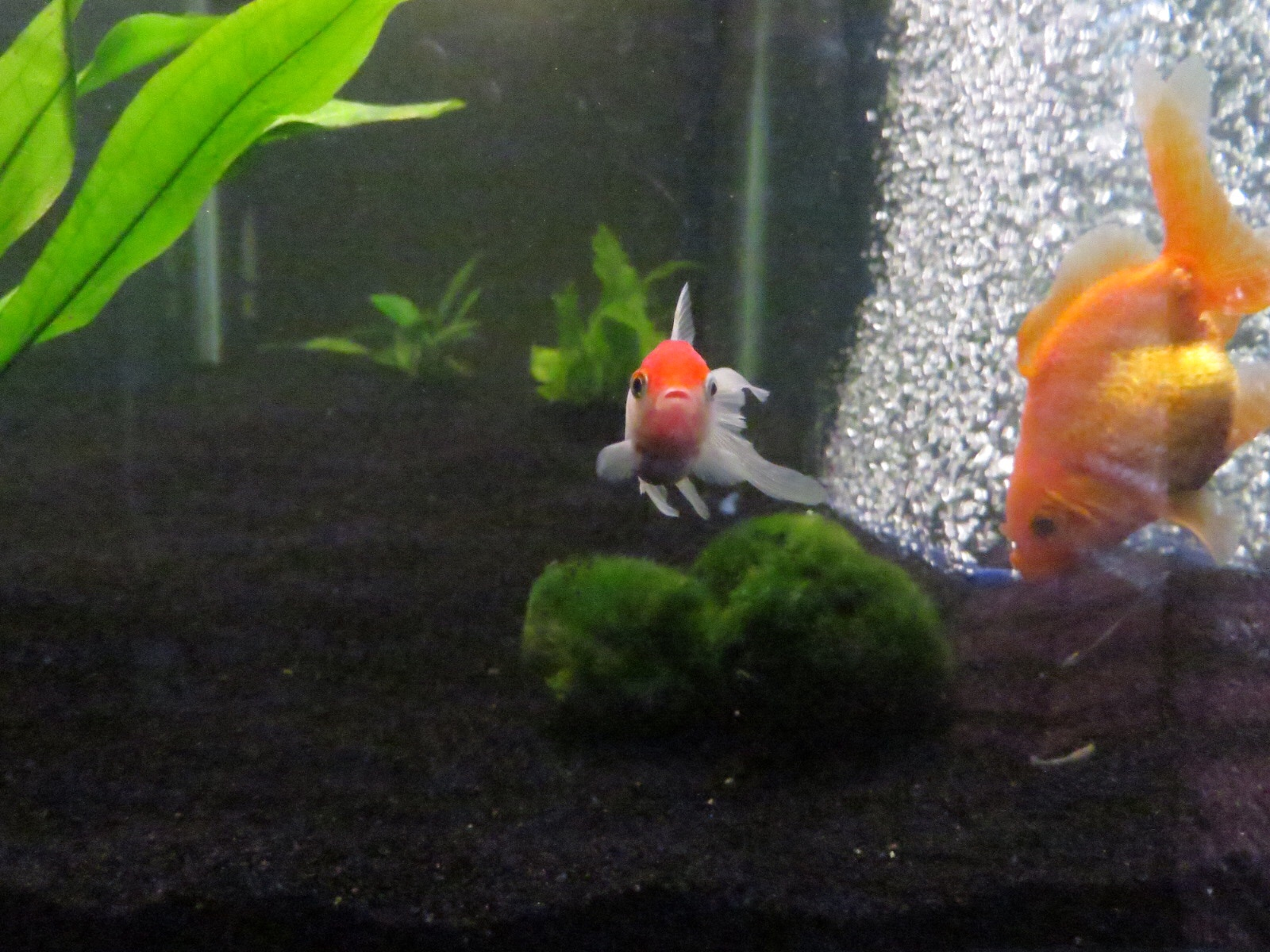 Fish aquarium in ecr - Fc15120692b93ed70dd2bb20a912b0dc Jpg