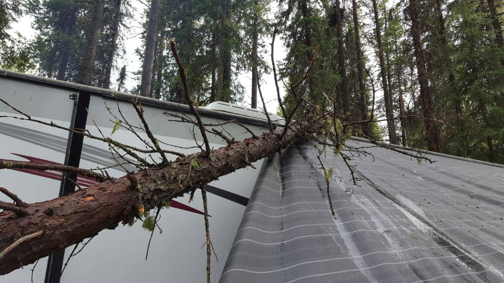 Tree Fell On Roof Any Thoughts On How Much This Repair