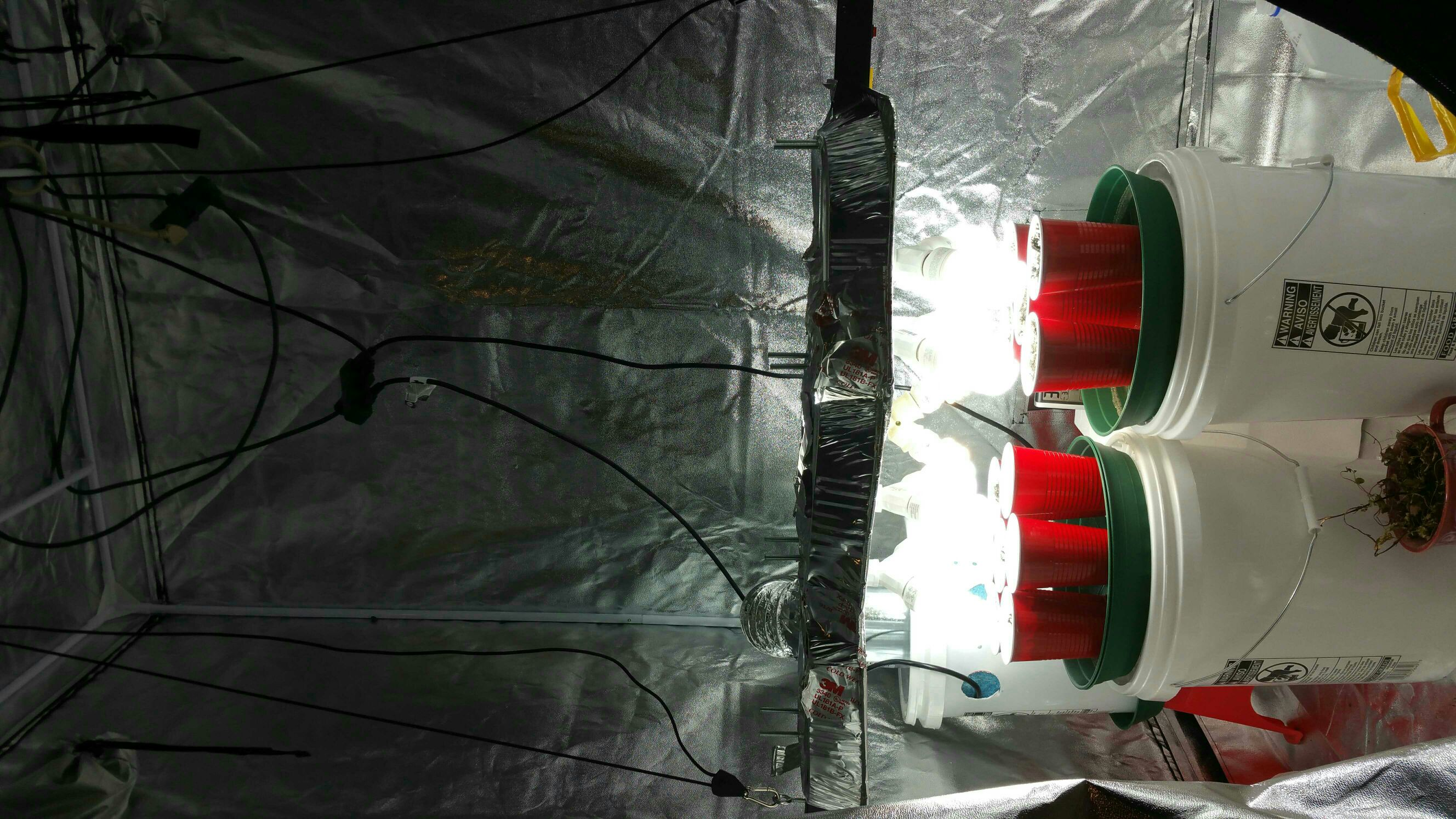 (see below) ... the diy cfl setup reflector is in the way and the led requires 30 to 40 inch distance from seedlings ... & Help with CFL and LED combo | Grasscity Forums