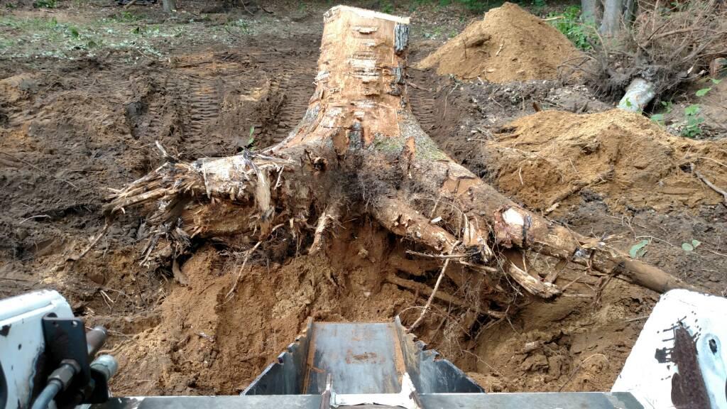 Stump Bucket Build