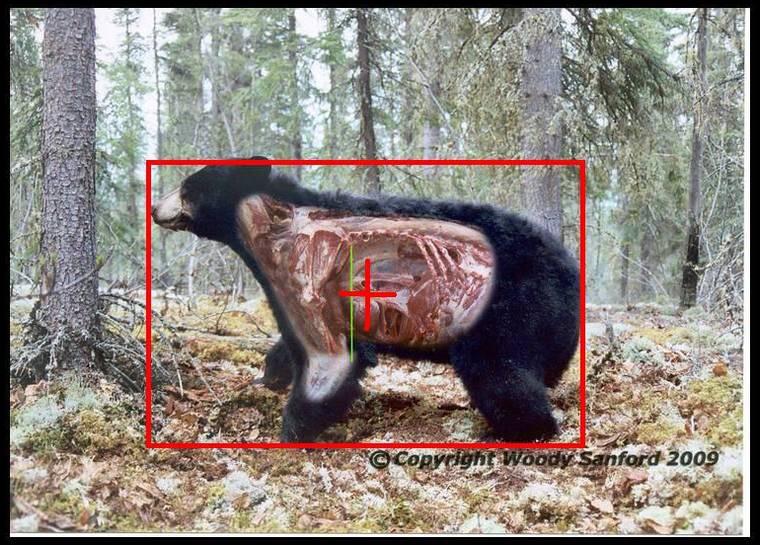 miré un ours Ee0e424ee69ce5e628e7e931dc9b9c7c