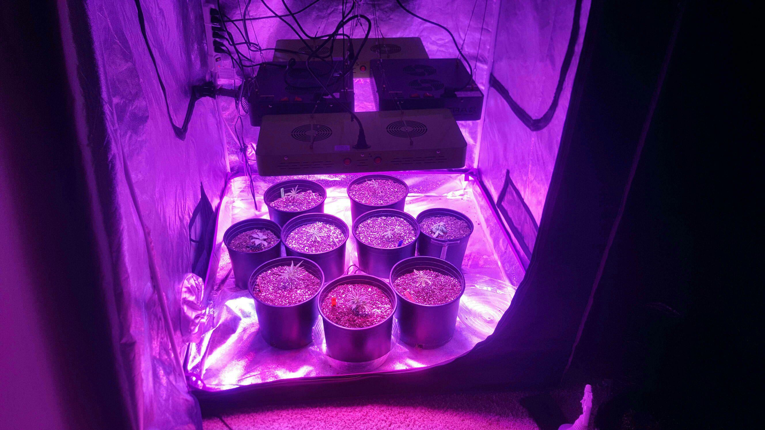 low priced 5daa7 6b78a 4x 600 watt led multi-strain grow | Grasscity Forums - The ...