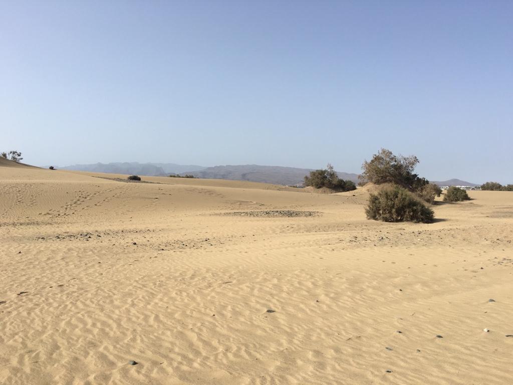 Imagini pentru muzeul nisipului dabuleni