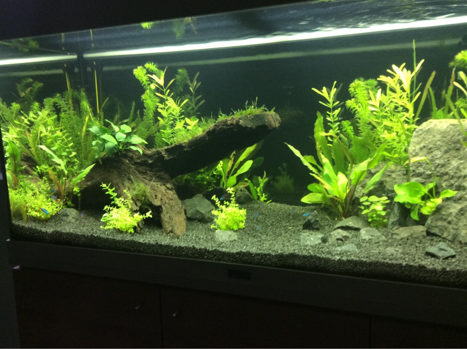 hilfe bei 115ll aquarium einfahren seite 2 aquarium forum. Black Bedroom Furniture Sets. Home Design Ideas