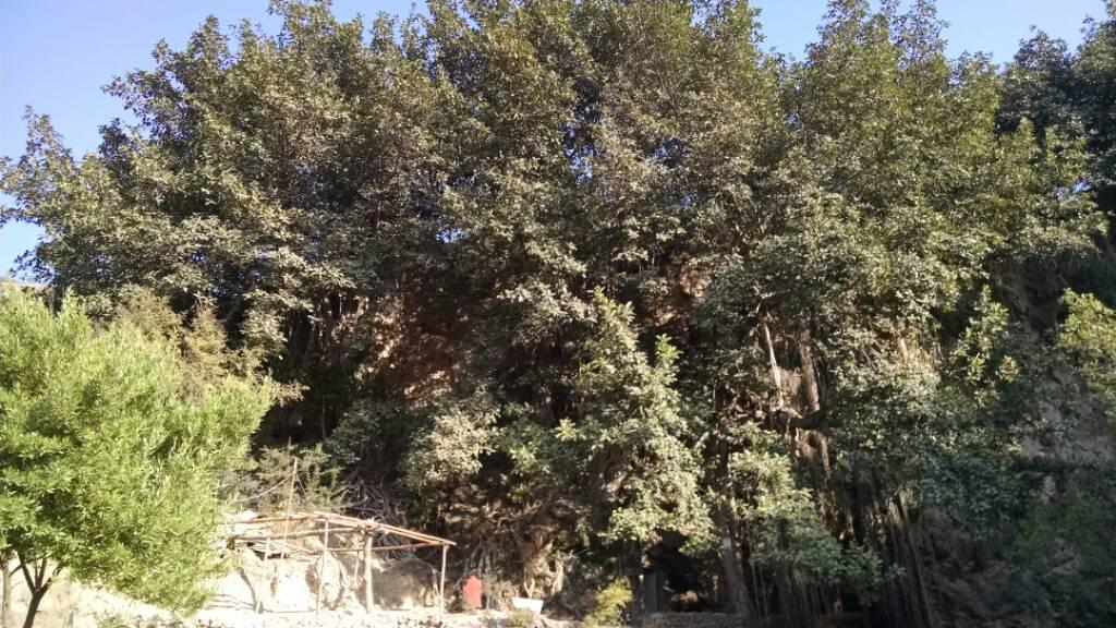 Secrets of Margala hills islamabad - 55282dd21d4367a2a3d39ef33c4b7657