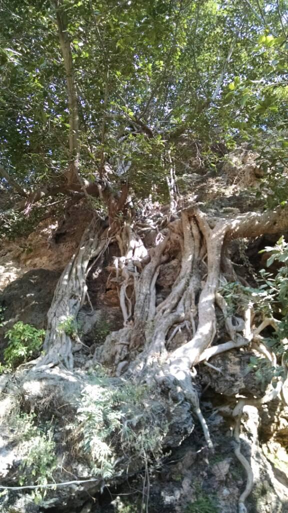 Secrets of Margala hills islamabad - d06dfa7ecb2a4c4aa63ca509d2cde5e6