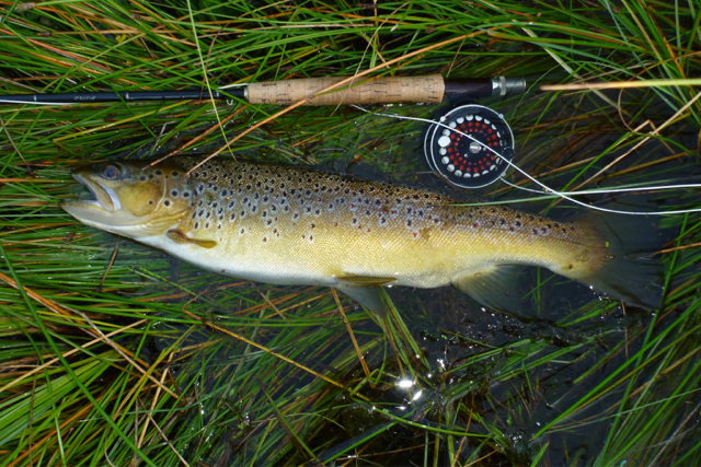 brown trout how to catch