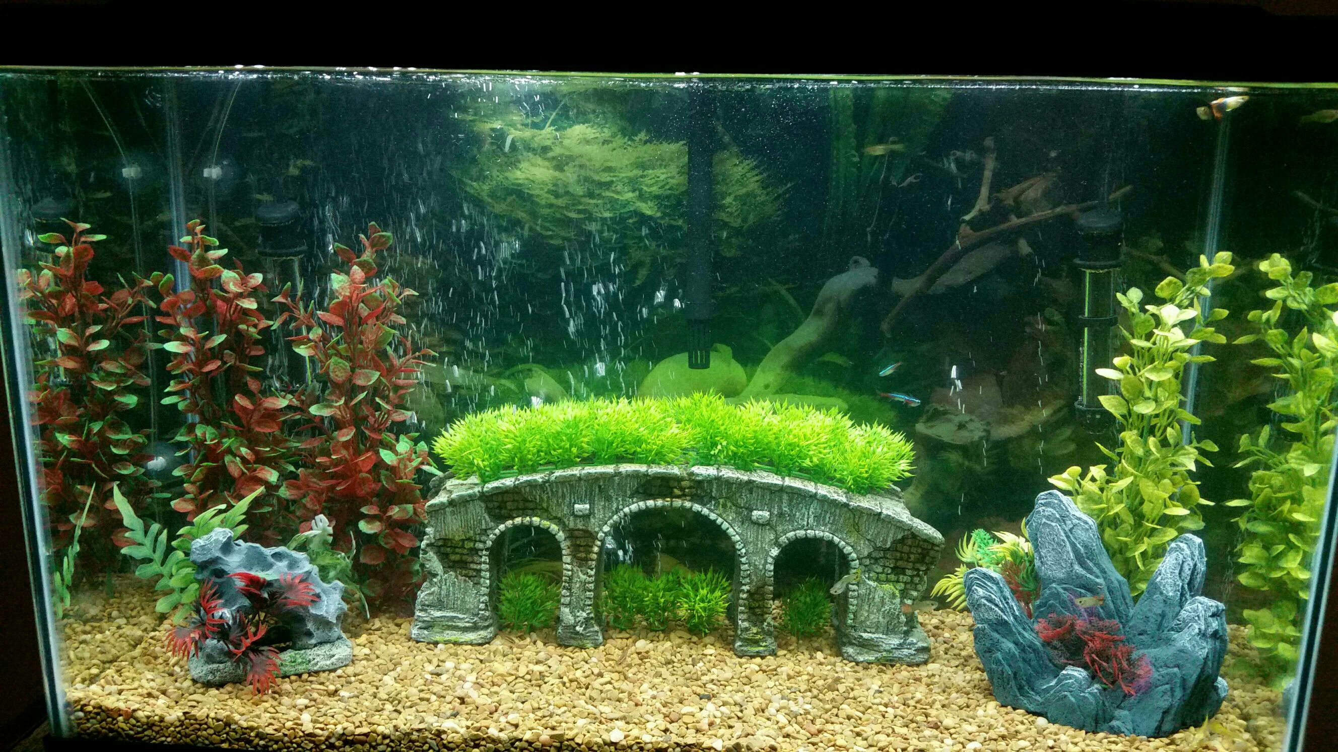 Missing neon tetra 256344 for Neon fish tank