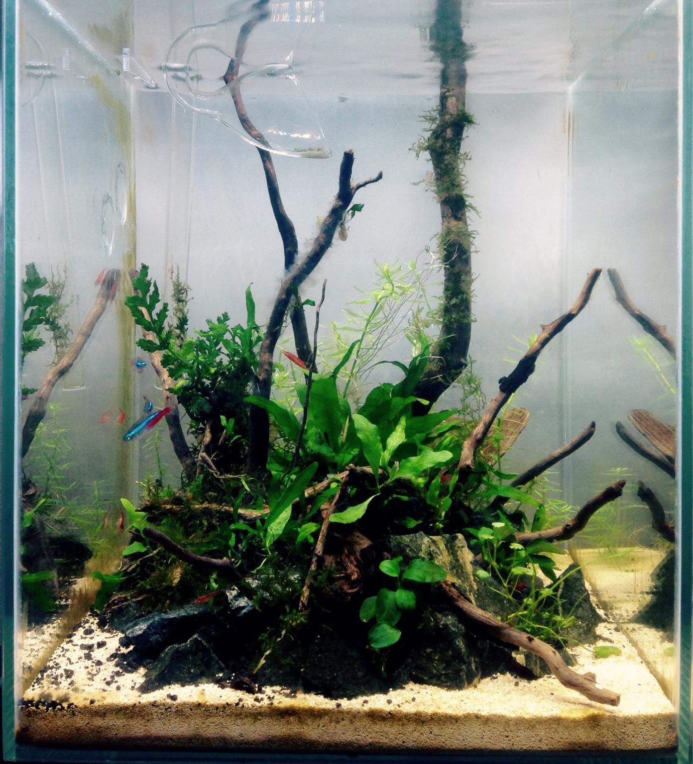 Aquascaping And Hardscaping 20 Gallon Long Tank Aquarium