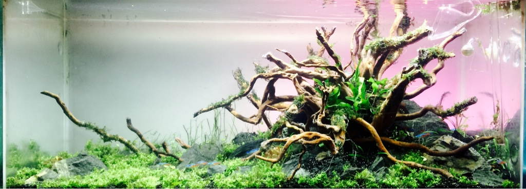 Nature Aquascape! | Aquarium Aquascaping | Page 2 258232