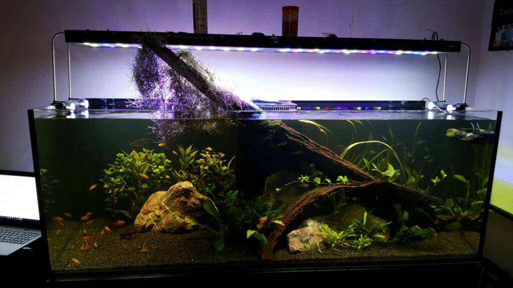 The planted tank forum view single post red sea reefer for Google fish tank mrdoob