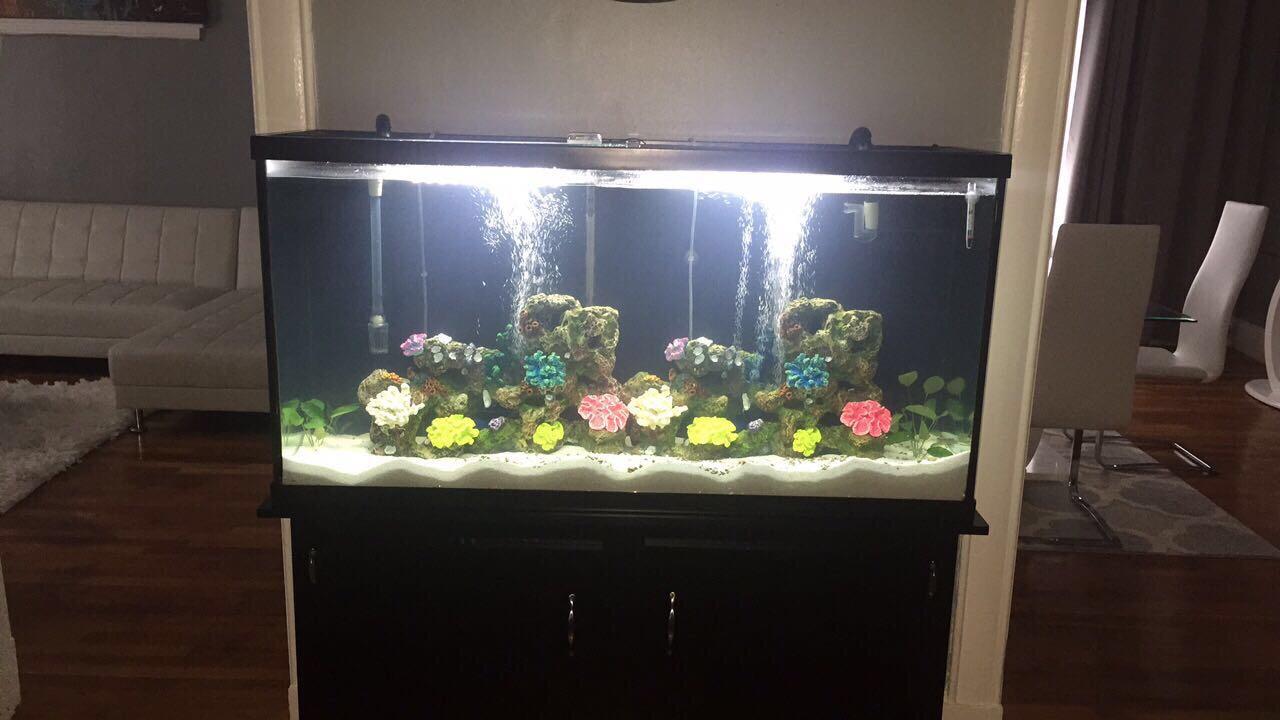 Stocking 60 gallon tank 263440 for 10 gallon fish tank stocking ideas