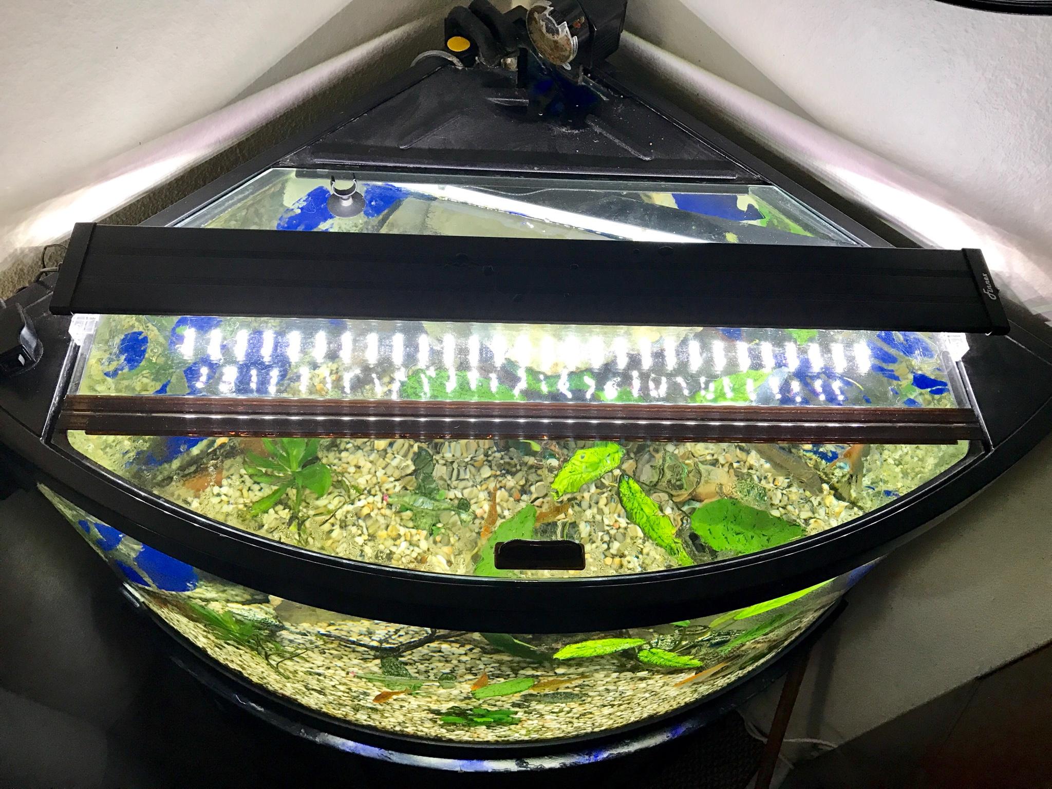 New 54 Corner Build Need Advice Freshwater Aquarium