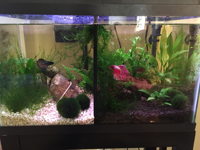 Show me your betta tank page 2 263623 for Fish tank supplies near me