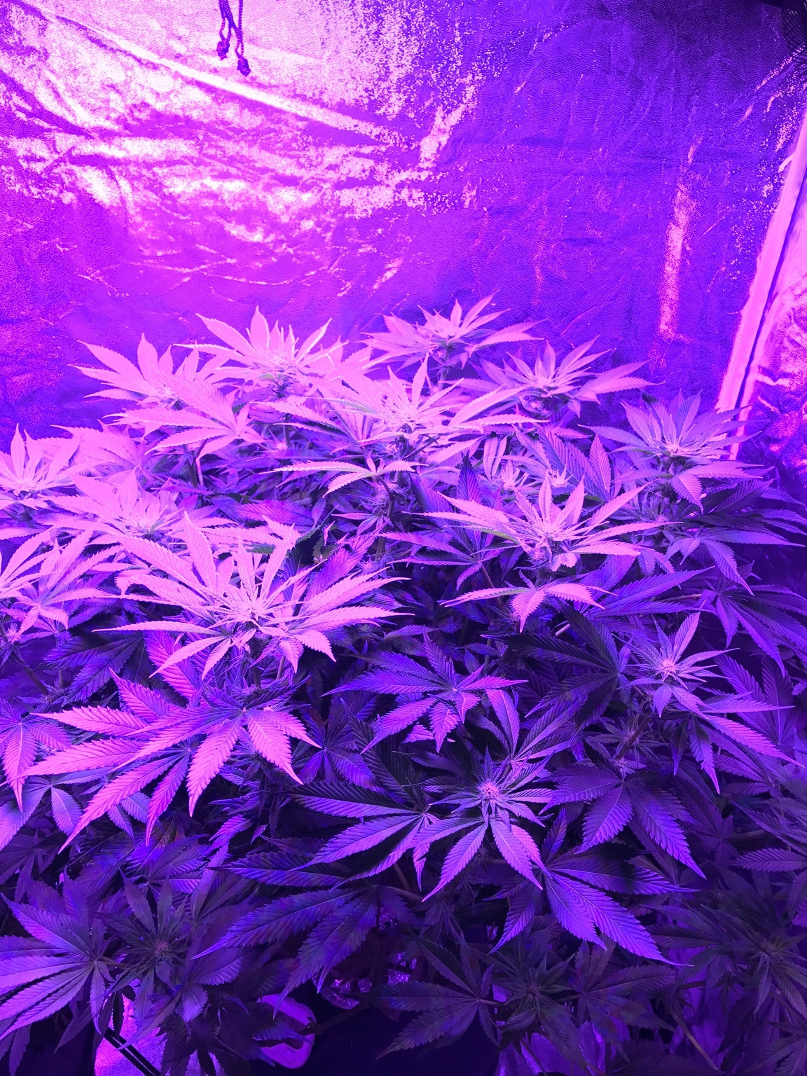 How Does My Plant Look Grasscity Forums