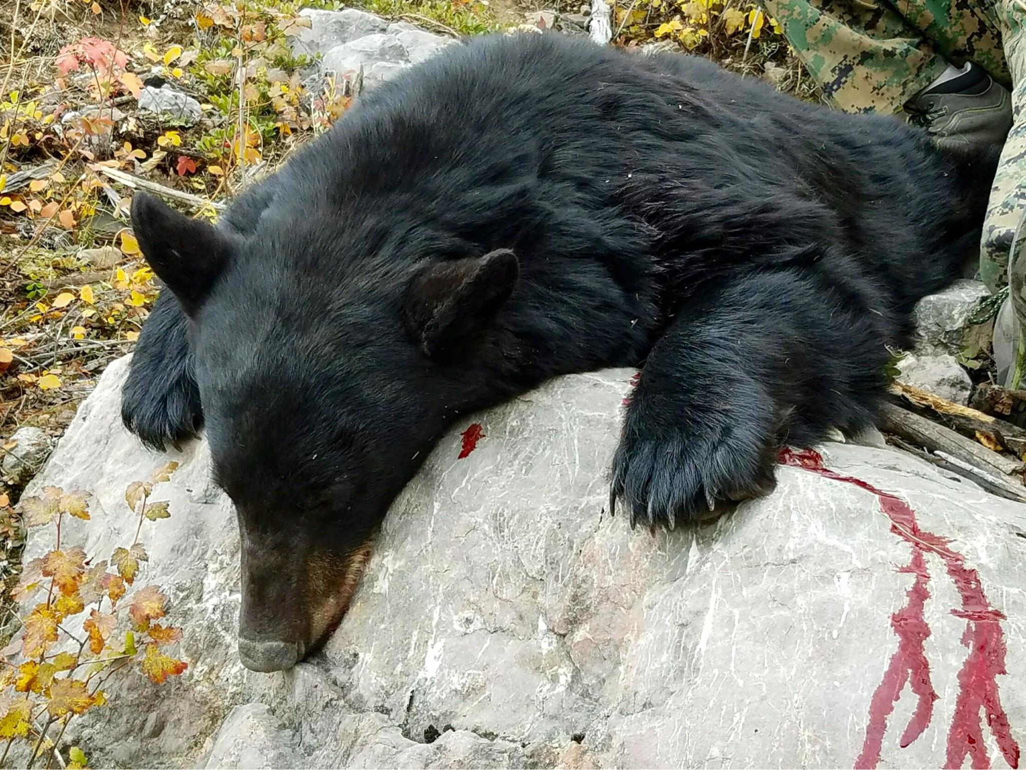 7mm-08 for black bear   Rokslide Forum