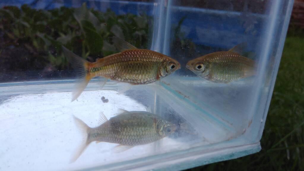 Mis peces aut ctonos del estanque fotos y videos taringa for Piletas para peces
