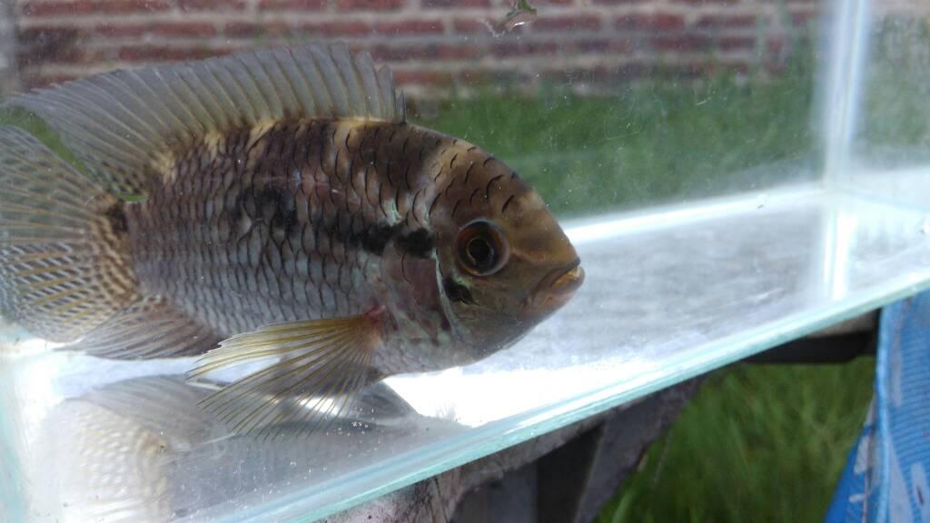 Mis peces aut ctonos del estanque fotos y videos taringa for Pileta con peces