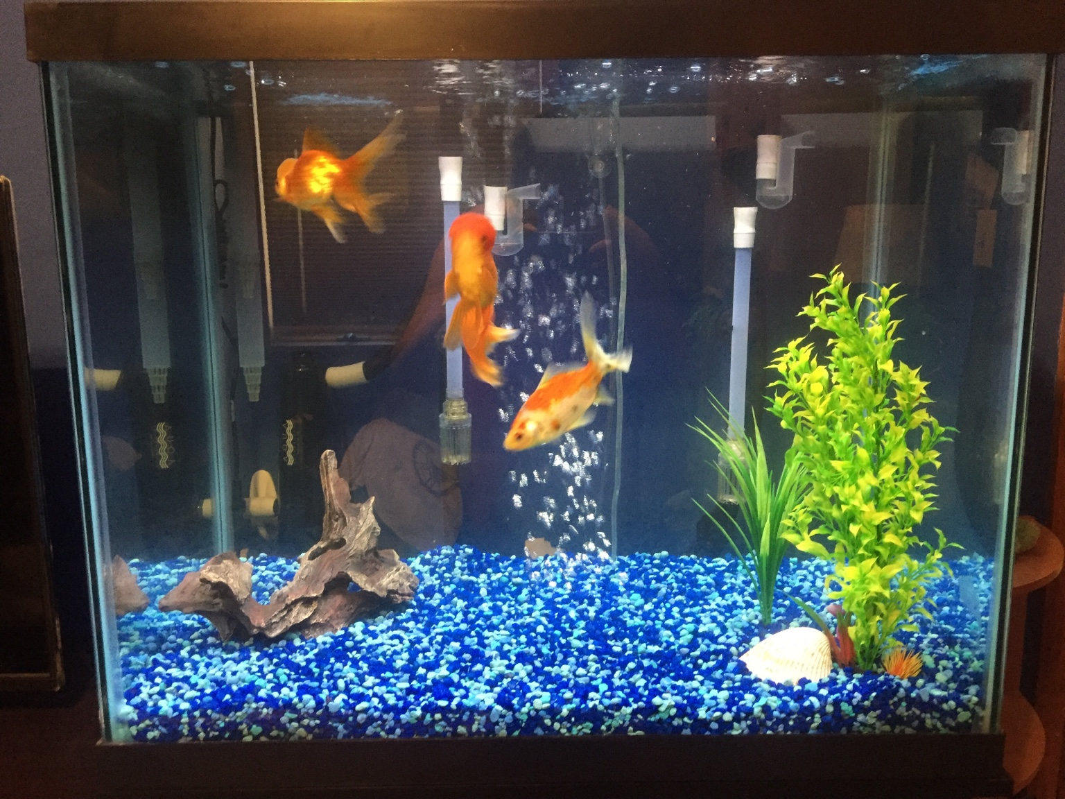65 gal column goldfish tank fish lore aquarium fish for 65 gallon fish tank