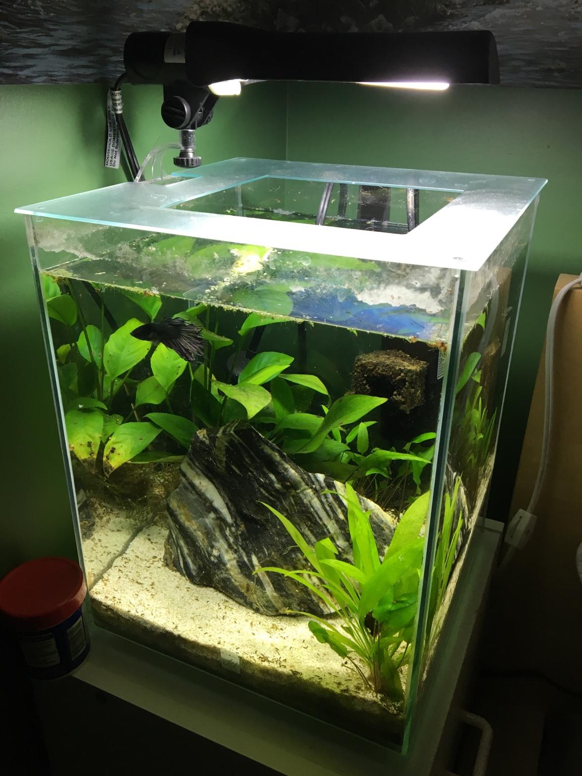 Betta in fluval chi 5 gallon 267335 for Well water for fish tank