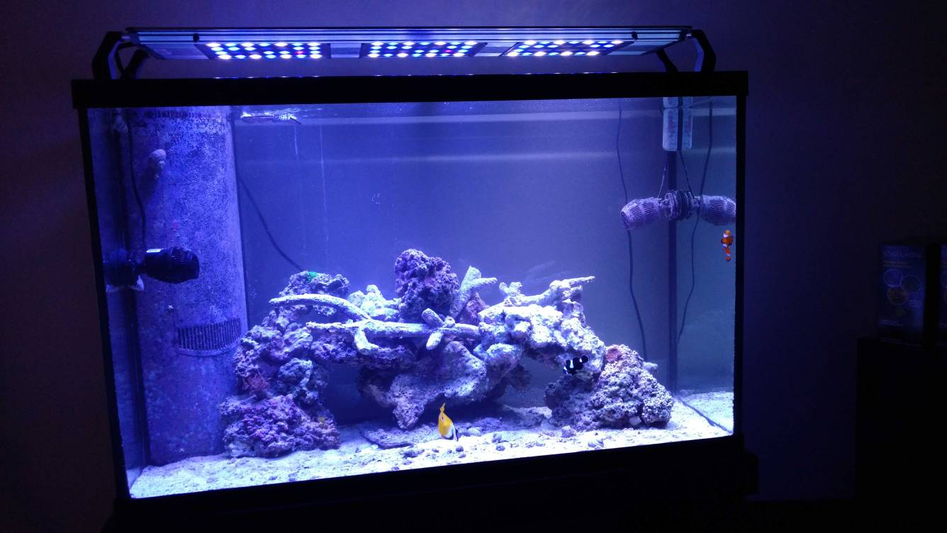 if you are new to reef central introduce yourself here archive